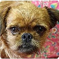 Adopt A Pet :: CASHEW - ADOPTION PENDING - Jackson, MS