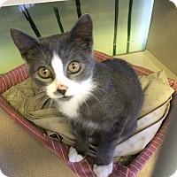 Adopt A Pet :: Justin - New York, NY