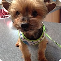 Adopt A Pet :: Sara - Mississauga, ON