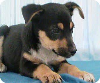 Terrier (Unknown Type, Medium) Mix Puppy for adoption in Maynardville, Tennessee - June Bug