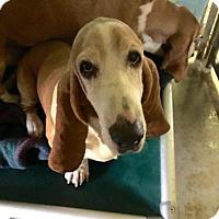 Adopt A Pet :: Thelma & Louise - Acton, CA