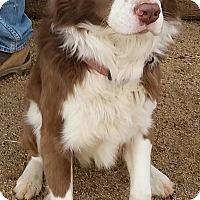 Adopt A Pet :: IVAN - San Pedro, CA