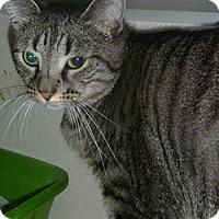 Adopt A Pet :: Miss Tatiana - Hamburg, NY
