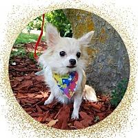 Adopt A Pet :: Bailey - Ocala, FL