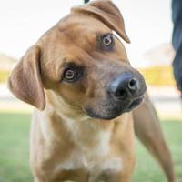 Adopt A Pet :: Lucky - Cedar Hill, TX