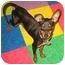 Photo 3 - Miniature Pinscher Puppy for adoption in Syracuse, New York - Buzz
