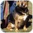 Photo 1 - Shepherd (Unknown Type) Mix Dog for adoption in Somerset, Pennsylvania - Atticus