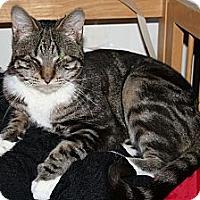 Adopt A Pet :: Serenade - Santa Rosa, CA
