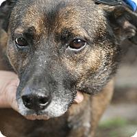 Adopt A Pet :: Ziggy - hollywood, FL