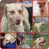 Adopt A Pet :: ZION - Inverness, FL