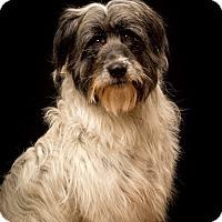 Adopt A Pet :: Odie - MEET HIM! - Norwalk, CT