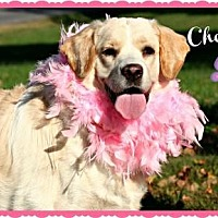 Adopt A Pet :: Cheyenne - Marion, KY