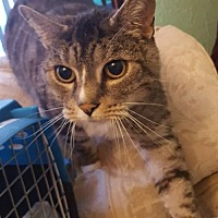 Adopt A Pet :: Mr Silver - Burlington, WA