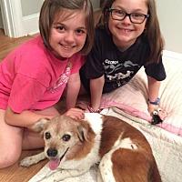 Adopt A Pet :: Brandy - Atlanta, GA