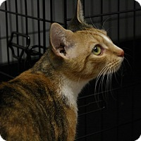 Adopt A Pet :: Molly (PB) - Exton, PA