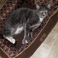 Adopt A Pet :: Channing - Parkton, NC