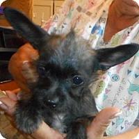 Adopt A Pet :: Elizabeth - Yucaipa, CA