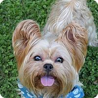 Adopt A Pet :: Coop - Denver, CO