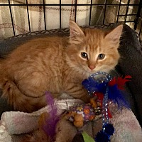 Adopt A Pet :: Teddy - Southington, CT