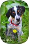 Coonhound Mix Puppy for adoption in Greensboro, Georgia - Otto