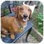 Photo 2 - Dachshund Dog for adoption in San Jose, California - Ricky