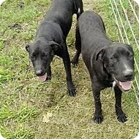Adopt A Pet :: Kelso - Moulton, AL