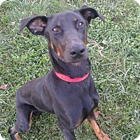 Adopt A Pet :: Dieter - New Richmond, OH