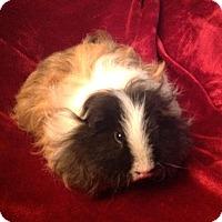 Adopt A Pet :: Jekyl - Williston, FL