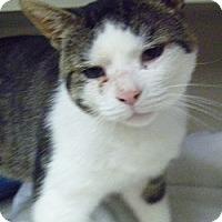 Adopt A Pet :: GW - Hamburg, NY