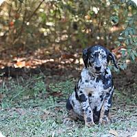 Adopt A Pet :: Finnegan - South Dennis, MA