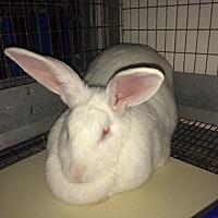 Adopt A Pet :: Chiffon - Mission Viejo, CA