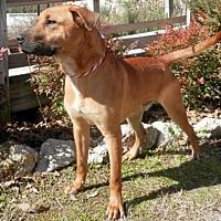 Black Mouth Cur Mix Dog for adoption in Tyler, Texas - Slaytor