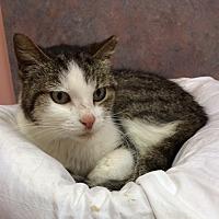 Adopt A Pet :: Shari - Cocoa, FL