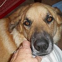 Adopt A Pet :: Pasha - Silver Spring, MD