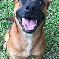 Adopt A Pet :: GRETA - Stamford, CT