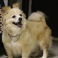 Adopt A Pet :: Peony - Elyria, OH