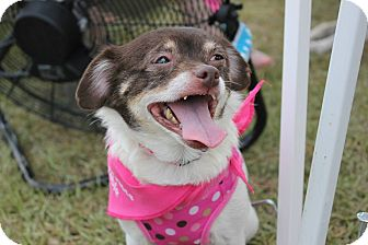 Pekingese/Terrier (Unknown Type, Small) Mix Dog for adoption in Baton Rouge, Louisiana - Miley