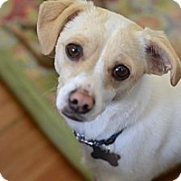 Adopt A Pet :: Sam - Los Angeles, CA