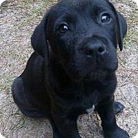 Adopt A Pet :: 'ROXY' - Brooksville, FL