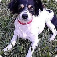 Adopt A Pet :: Tina Marie - Jacksonville, FL