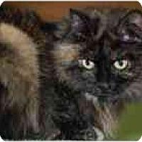 Adopt A Pet :: Jennifer - Marietta, GA