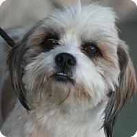 Adopt A Pet :: Gus - Canoga Park, CA