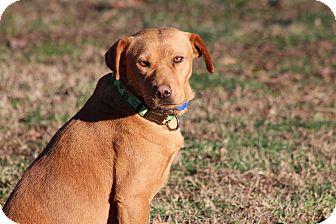 Terrier (Unknown Type, Medium)/Labrador Retriever Mix Dog for adoption in Prince Frederick, Maryland - Tippi