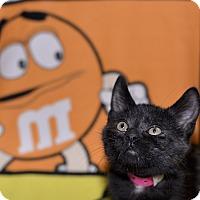 Adopt A Pet :: Scary Spice - Medina, OH