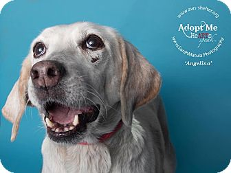Hound (Unknown Type) Mix Dog for adoption in New Milford, Connecticut - Angelina