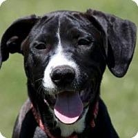 Adopt A Pet :: Ellie socks - Broken Arrow, OK