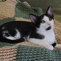Adopt A Pet :: KRAGLIN-WANTS A FAMILY TO LOVE - Plano, TX