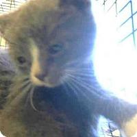 Adopt A Pet :: *TIDUS - Sacramento, CA