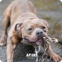 Adopt A Pet :: Stubs - Middletown, NY