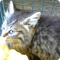 Adopt A Pet :: A714812 - Sacramento, CA